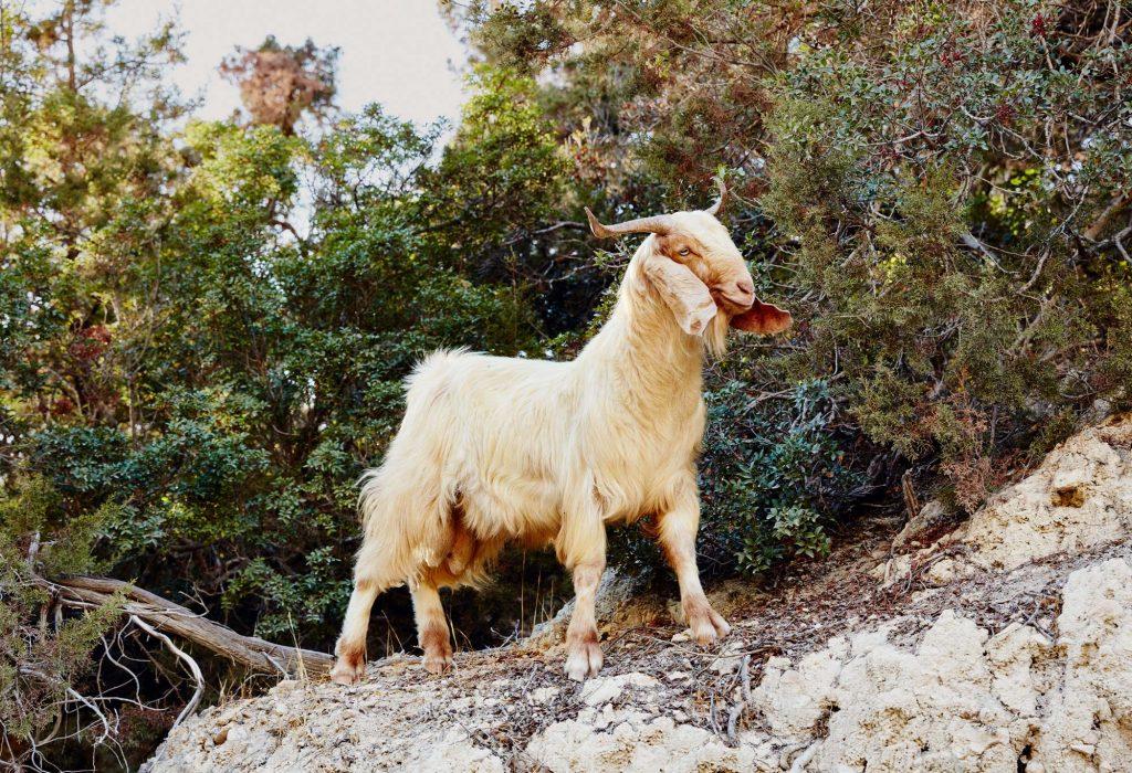 Sardinia, Sicily & Cyprus, Ignant Travel Patrick Desbrosses